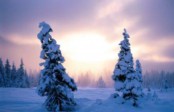 Winter Wallpaper 003 1600x1200 340x220