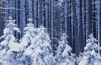 Winter Wallpaper 014 1600x1200 340x220