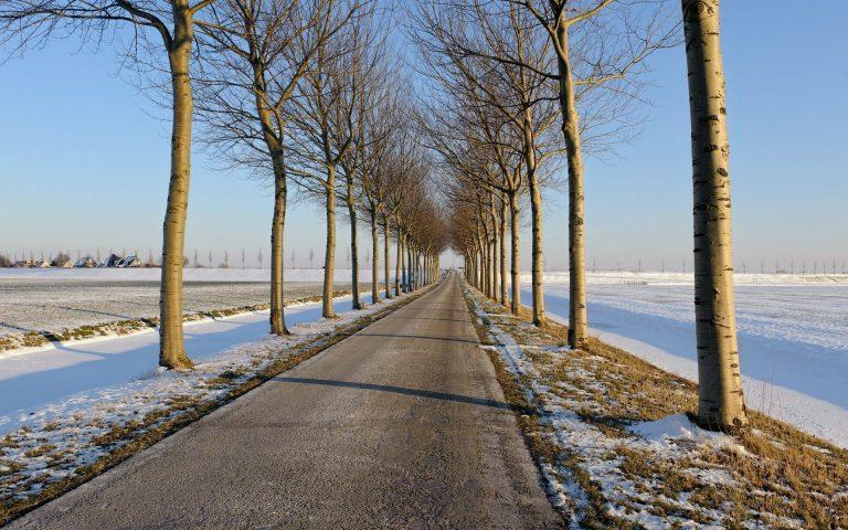 Winter Wallpaper 026 1920x1200 768x480