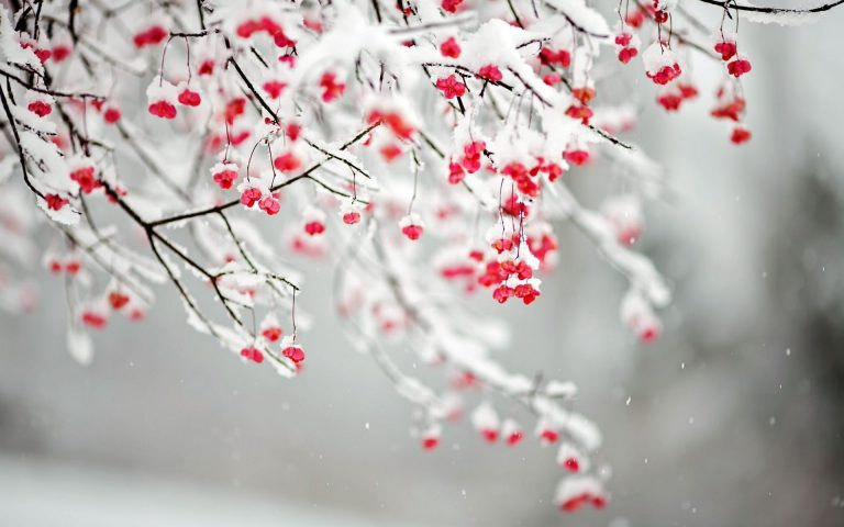 Winter Wallpaper 028 1920x1200 768x480