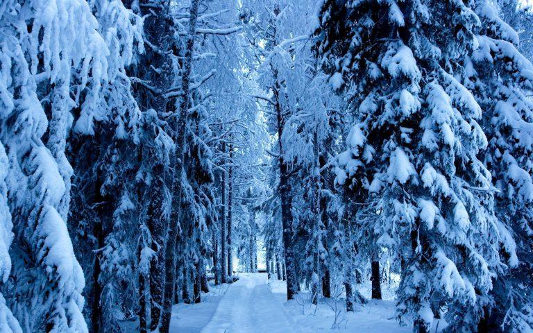Winter Wallpaper 029 1920x1200 768x480
