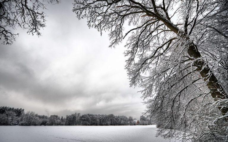 Winter Wallpaper 039 1920x1200 768x480