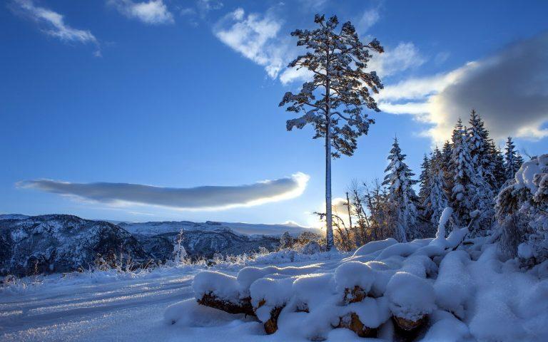 Winter Wallpaper 042 2560x1600 768x480