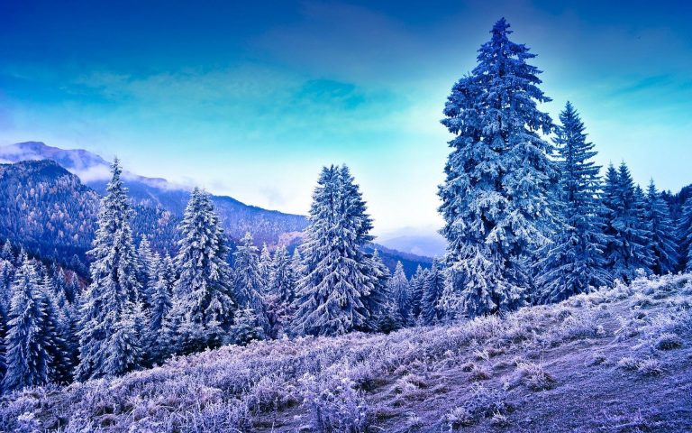 Winter Wallpaper 049 1920x1200 768x480