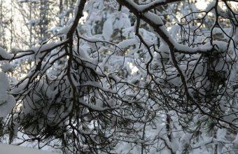 Winter Wallpaper 053 1920x1200 340x220