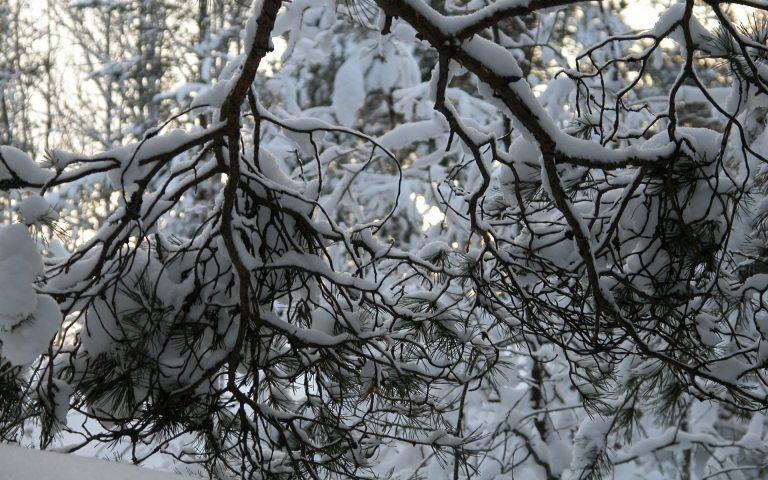Winter Wallpaper 053 1920x1200 768x480