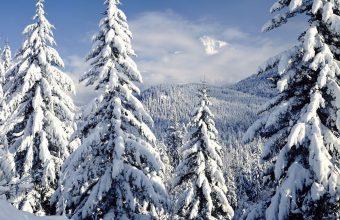 Winter Wallpaper 054 1680x1050 340x220