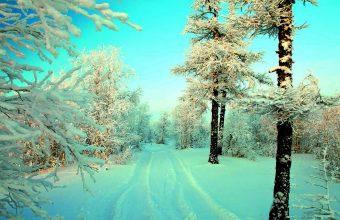 Winter Wallpaper 062 1450x900 340x220