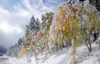 Winter Wallpaper 065 1920x1200 340x220