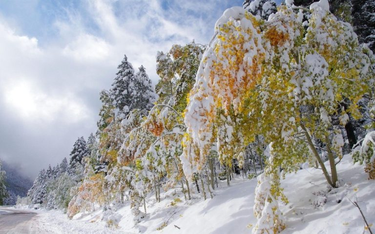 Winter Wallpaper 065 1920x1200 768x480