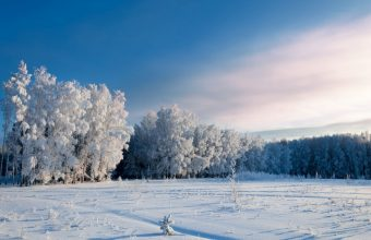 Winter Wallpaper 066 1920x1200 340x220