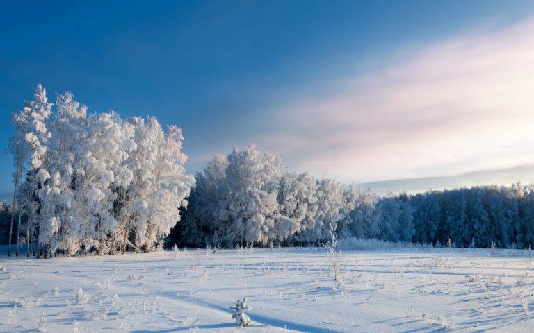 Winter Wallpaper 066 1920x1200 768x480