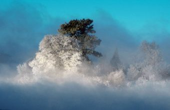 Winter Wallpaper 067 1680x1050 340x220