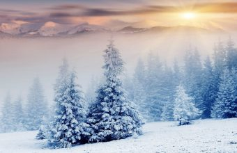 Winter Wallpaper 069 2880x1800 340x220