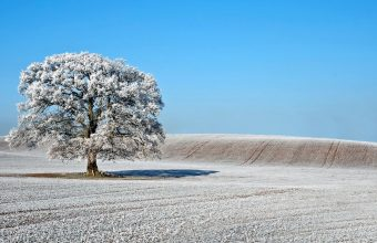 Winter Wallpaper 075 1920x1080 340x220