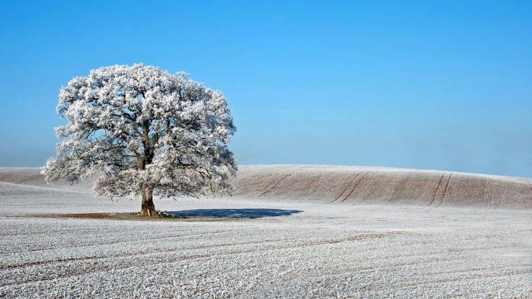 Winter Wallpaper 075 1920x1080 768x432