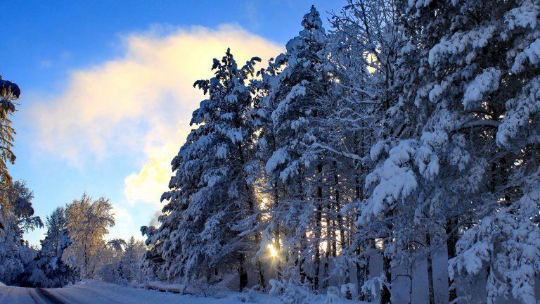 Winter Wallpaper 079 1920x1080 768x432