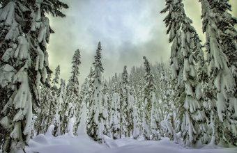 Winter Wallpaper 085 2048x1365 340x220