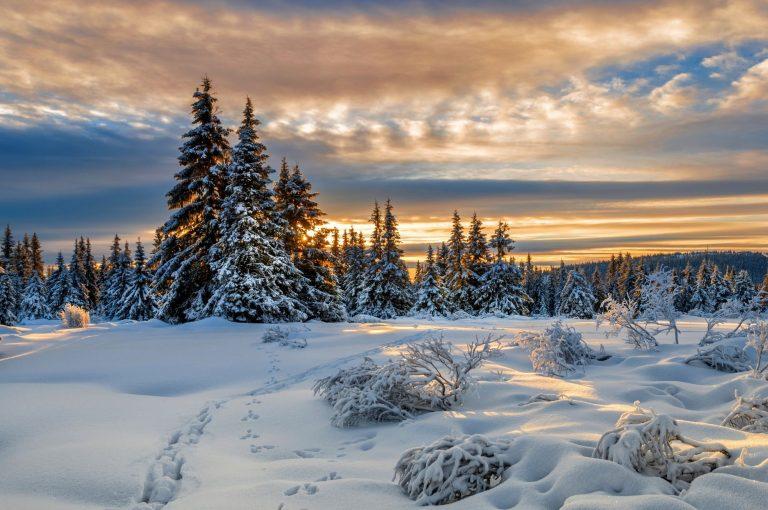Winter Wallpaper 105 2000x1328 768x510