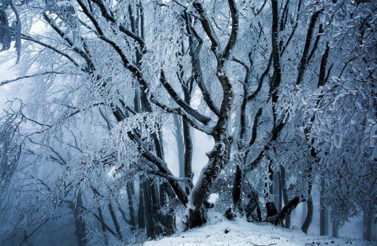 Winter Wallpaper 116 1954x1275 768x501