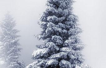 Winter iPhone 7 Wallpaper 750x1334 340x220