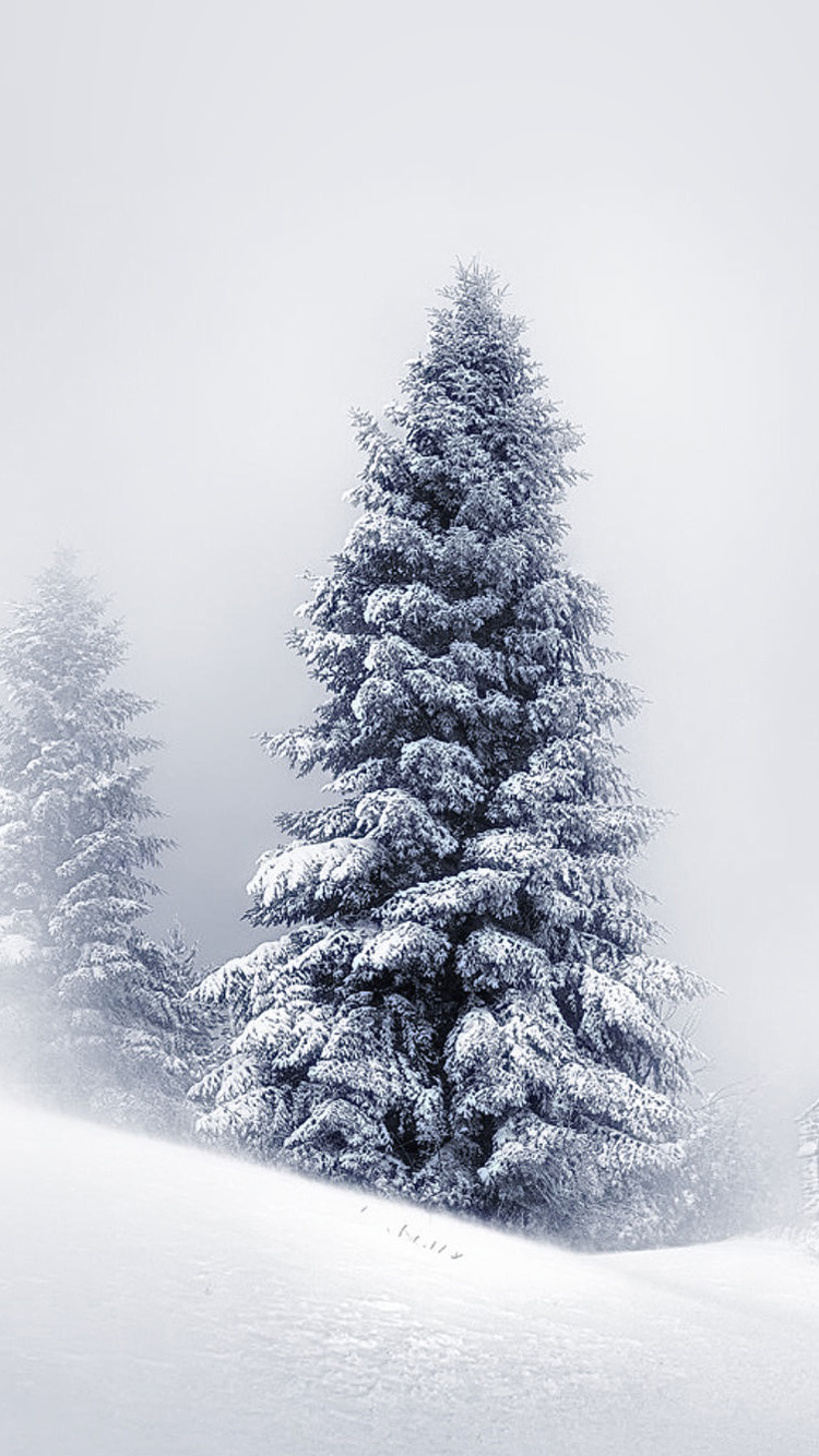 Winter Scene Iphone 7 Wallpaper 750x1334