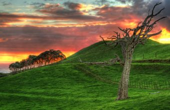 Wonderful Grassy Hill By The Sea At Sunset Hdr Wallpaper 1920x1200 340x220