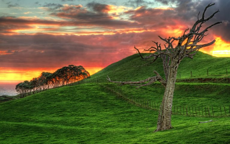 Wonderful Grassy Hill By The Sea At Sunset Hdr Wallpaper 1920x1200 768x480