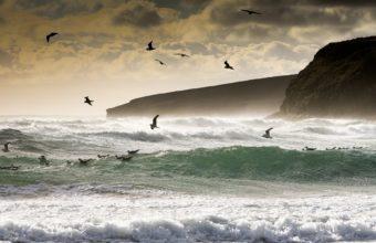 animals birds nature ocean sea waves 340x220