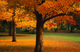 Beautiful Golden Trees Wallpaper 1920x1080 340x220