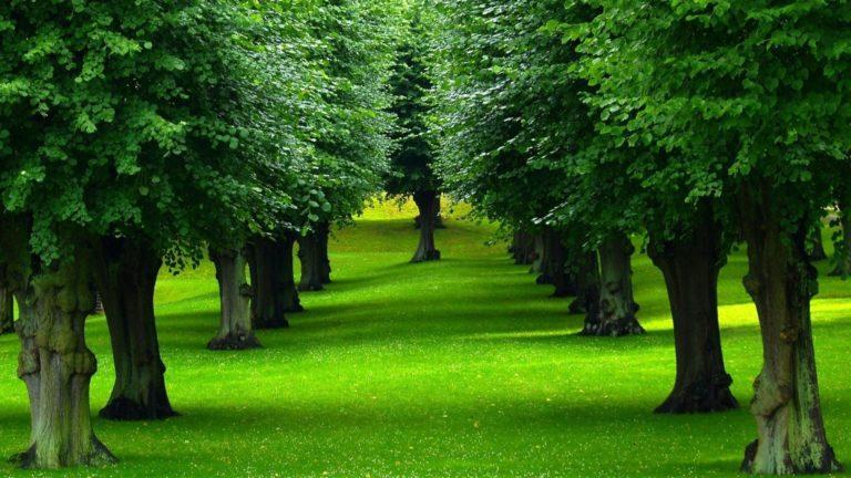 Beautiful Trees Row Wallpaper 1920x1080 768x432