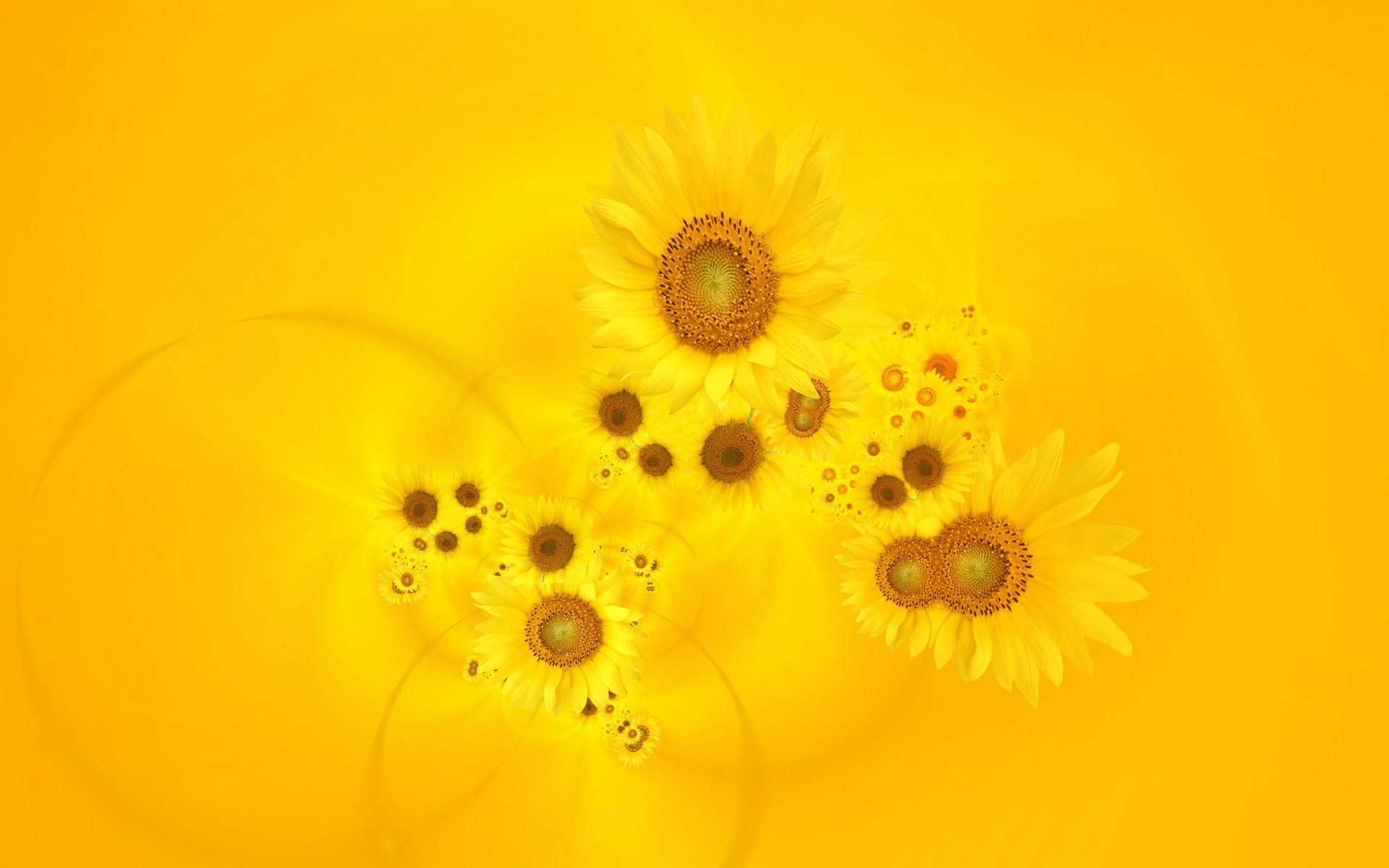 sunflower wallpapers hd