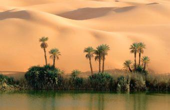 Desert oasis 340x220