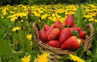 Flowers Berries Strawberries Wallpaper 1349x900 340x220
