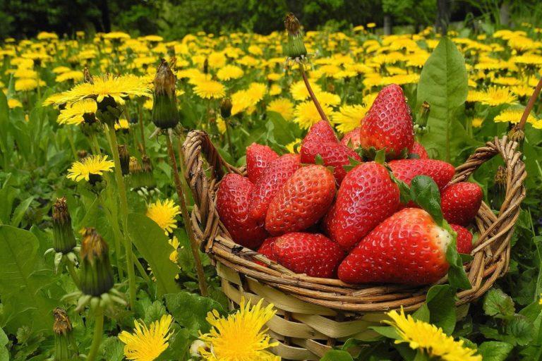 Flowers Berries Strawberries Wallpaper 1349x900 768x512