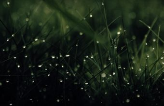Green Nature Rain Grass Water Drops Wallpaper 1920x1080 340x220