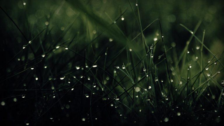 Green Nature Rain Grass Water Drops Wallpaper 1920x1080 768x432
