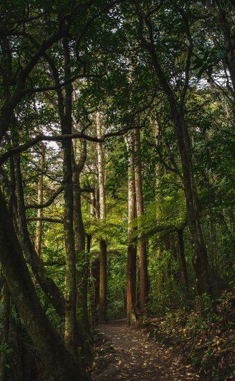 Greenry Trees Wallpaper 340x550