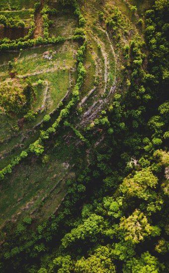 Jungle Path Wallpaper 340x550
