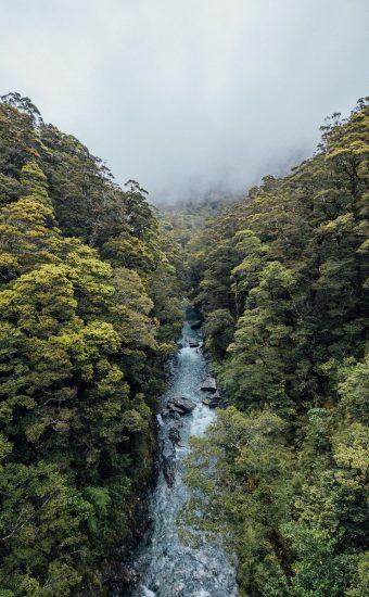 Jungle Stream Wallpaper 340x550