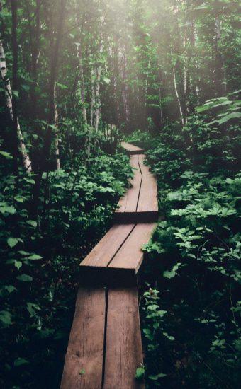 Jungle Wood Track Wallpaper 340x550