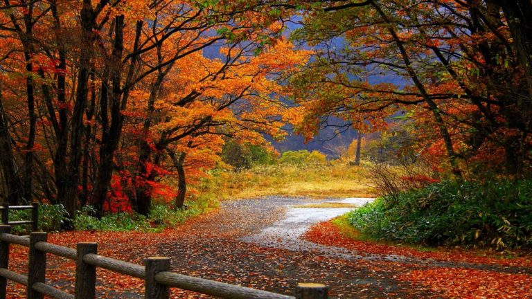 Landscapes Nature Trees Roads Forests Wallpaper 1920x1080 768x432