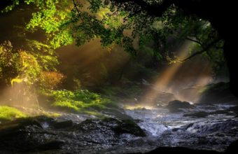 Lanscapes Trees Forest Water Rapids Wallpaper 1920x1200 340x220