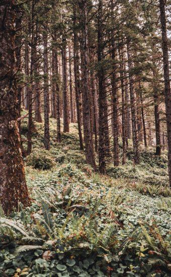 Large Trees Wallpaper 340x550