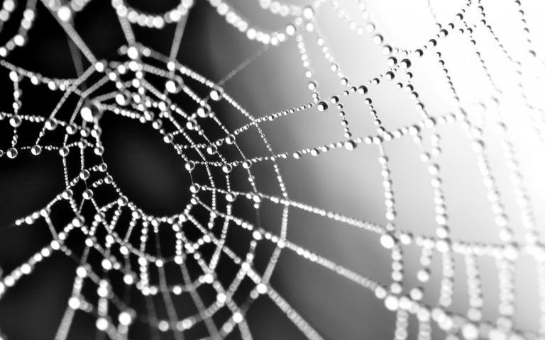 Macro Spiderweb Webs Water Drops Wallpaper 1920x1200 768x480