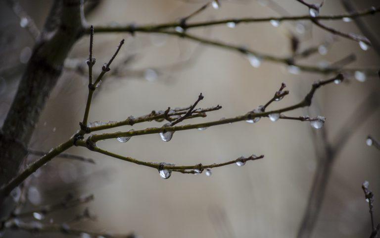 Nature Drops Water Wet Rain Storm Wallpaper 1920x1200 768x480