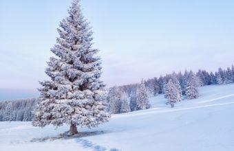 Nature Landscapes Hills Trees Winter Wallpaper 1920x1200 340x220
