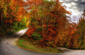 Nature Landscapes Roads Path Trees Wallpaper 1920x1200 340x220