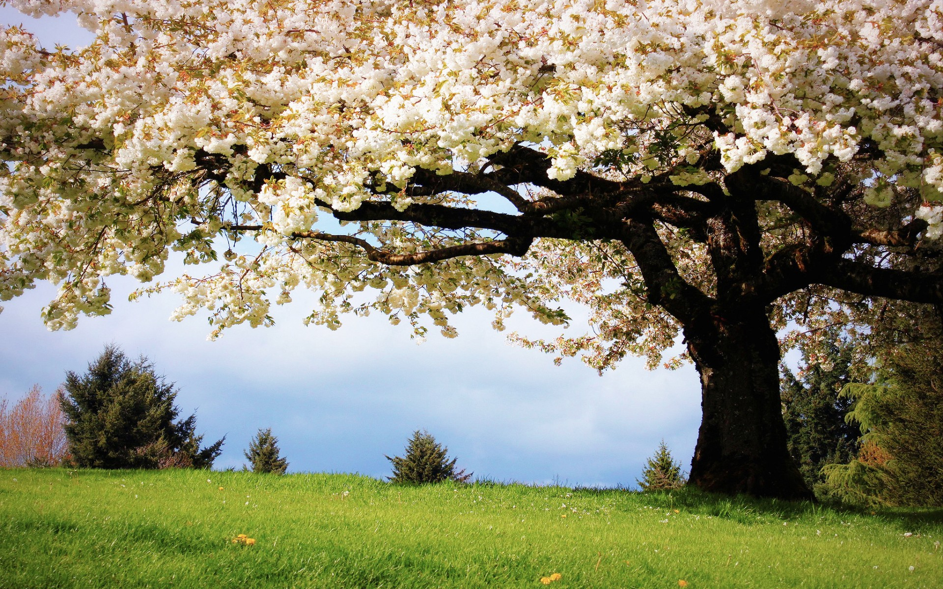 Nature Landscapes Trees Flowers Wallpaper 1920x1200