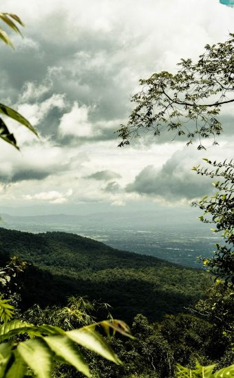Sky Jungle View Wallpaper 340x550